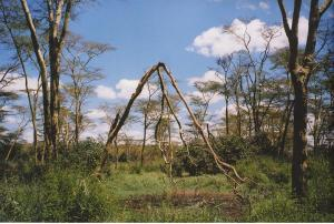 Landscape, Tanzania. © Hussain Aga Khan