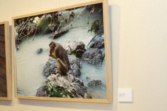 Monkey by Stream