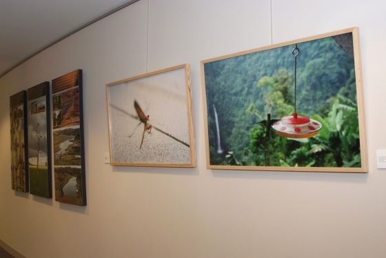 From left - scenic photos, praying mantis, hummingbird and bees