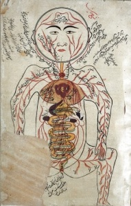"""Arteries and Viscera -  depiction in Avicenna's Canon of Medicine). Please click for historical images. Credit"""" Wellc ome Images. Copyright."""