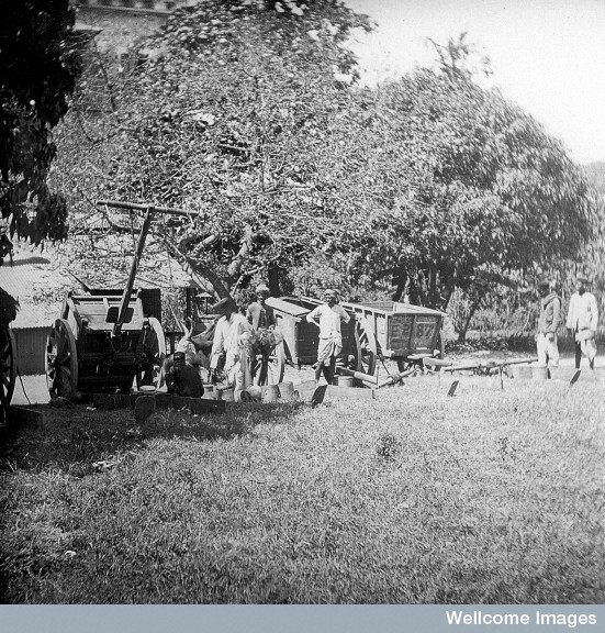 Bombay Municipal carts bringing in the rats. Photo Credit: Wellcome Library, London. Wellcome Images. Copyright.