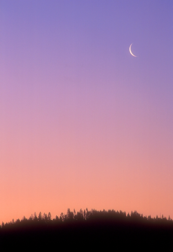 A new moon at Mackerricher State Park, California, USA. Photo: Istockphoto. Copyright.