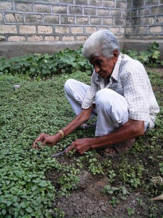 Gulamhusen - born into a farming community - seen in his plot