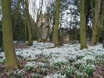Bank_Hall_Snowdrops