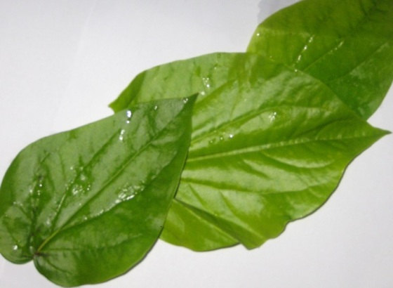 Paan Leaves. Photo: Shariffa Keshavjee.