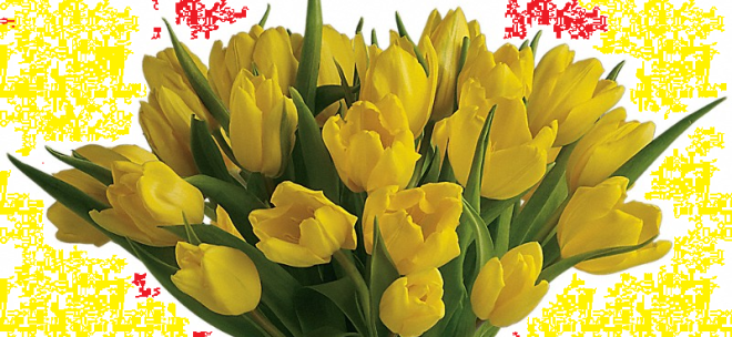 Yellow Tulips - Hope amidst Tragedy