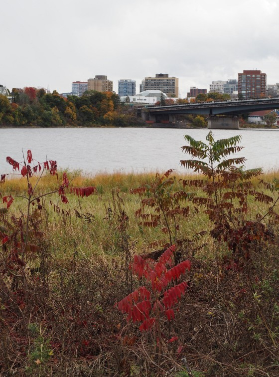 The architecture of the dome of Delegation of the Ismaili Imamat Building seen above from Jacques Cartier Park is centred around the beautiful mysteries of rock crystal. Please see the Ismaili Imam's quote and click on image for photos of Ottawa-Gatineau foliage.