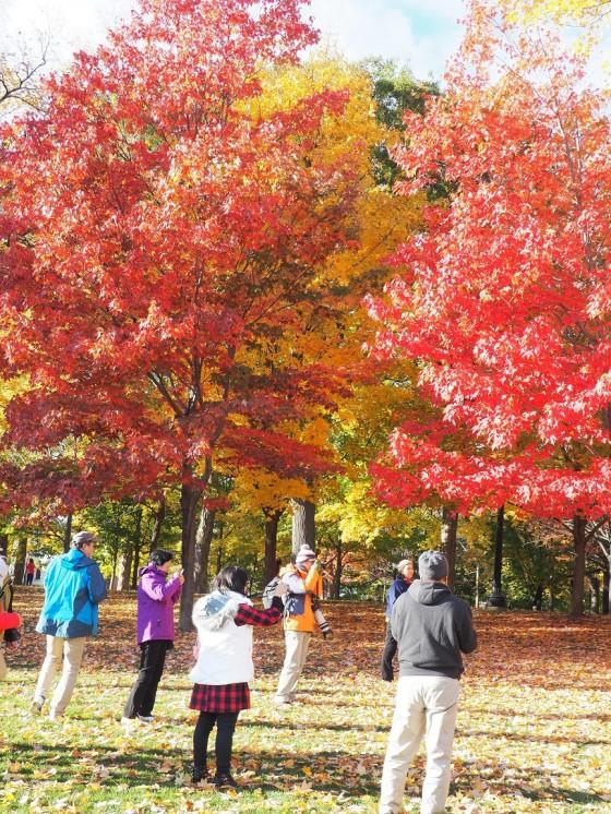 Please click on image for autumn foliage in the Ottawa-Gatineau, the National Capital Region.