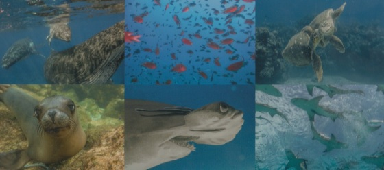 Back Cover Photos Diving Into Wildlife by Hussain Aga Khan