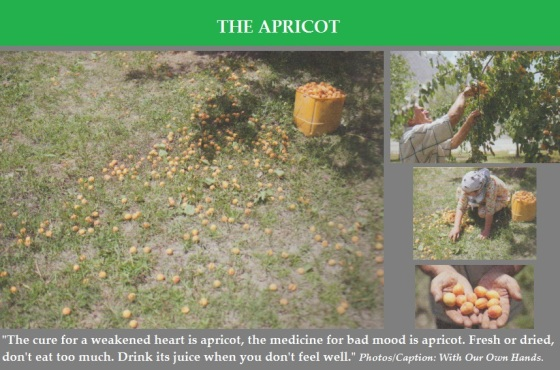 with-our-own-hands-apricots-photos-and-caption
