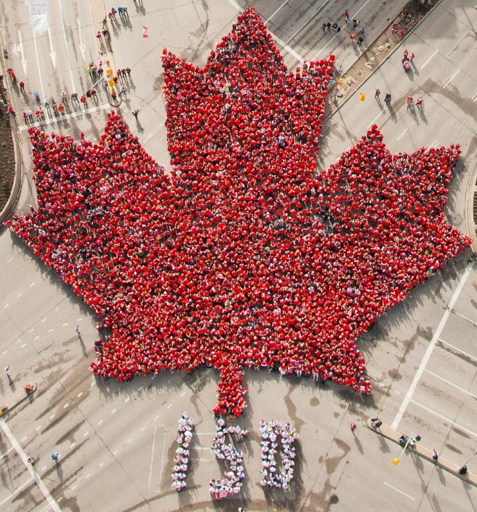 Canada Day Living Maple Leaf in Winnipeg Simerg