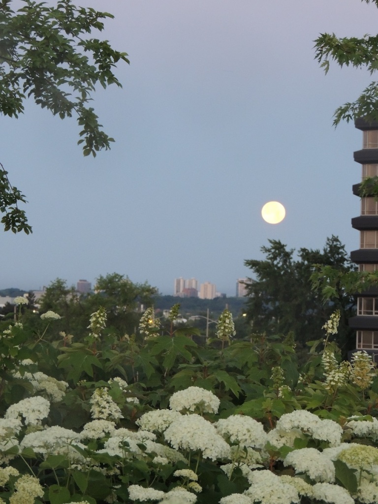 Aga Khan Park Full Moon Simerg