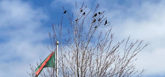 Aga Khan Park Ismaili Flag Birds