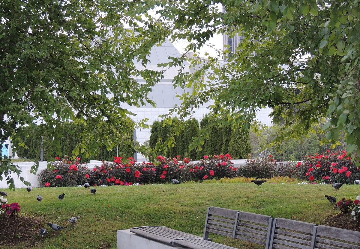 Hibiscus and Pigeons Aga Khan Park, Peace, Power, Compassion, Wisdom Simerg Malik Merchant