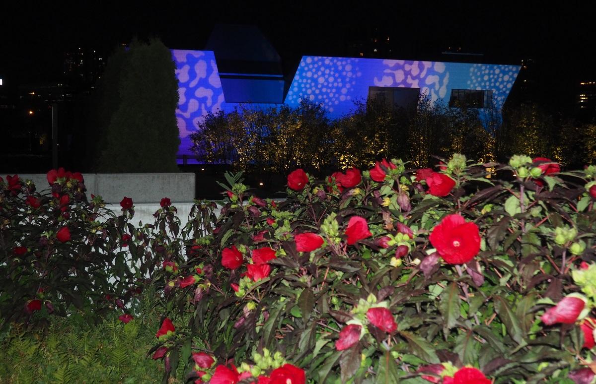 Hibiscus Aga Khan Park Simerg